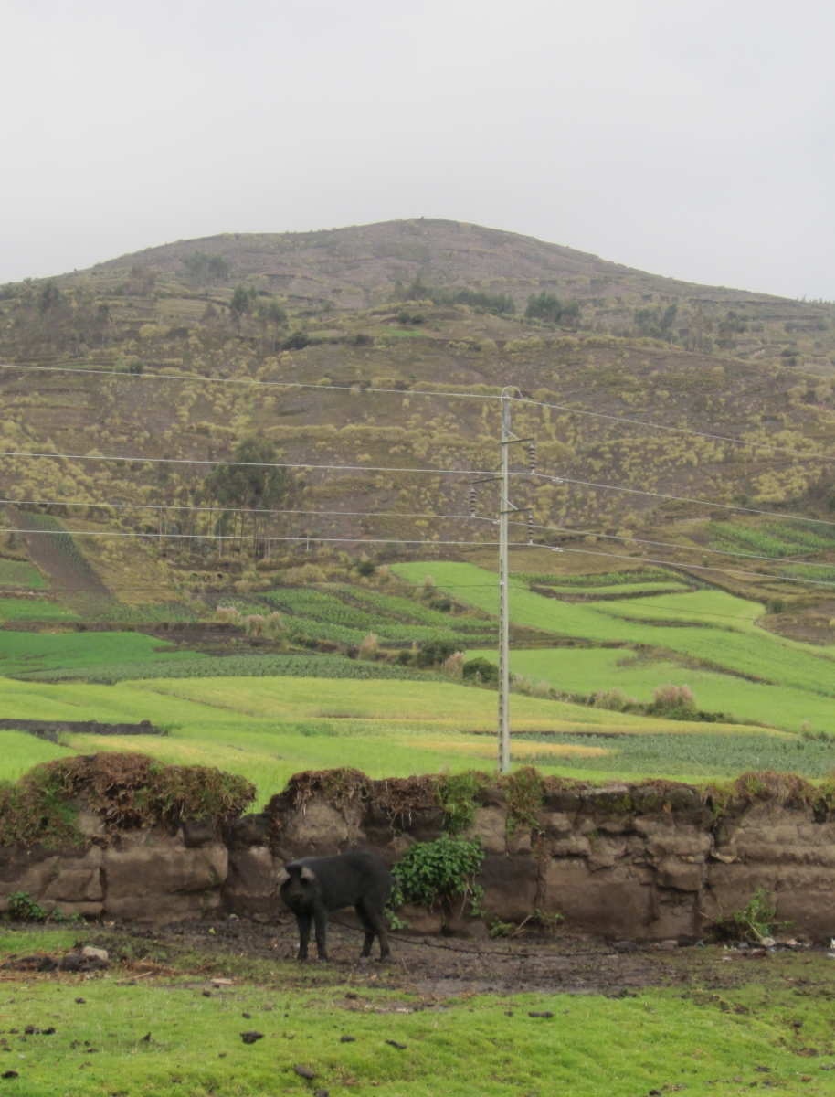 Terraced Farm